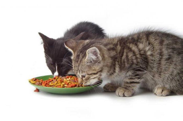 отличие корма для котят и взрослых кошек