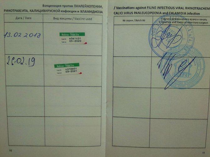Отметки ветеринара в ветеринарном паспорте для кошки