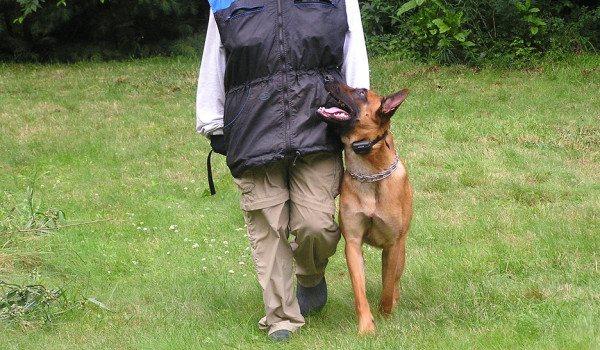 Отработка с собакой команды рядом