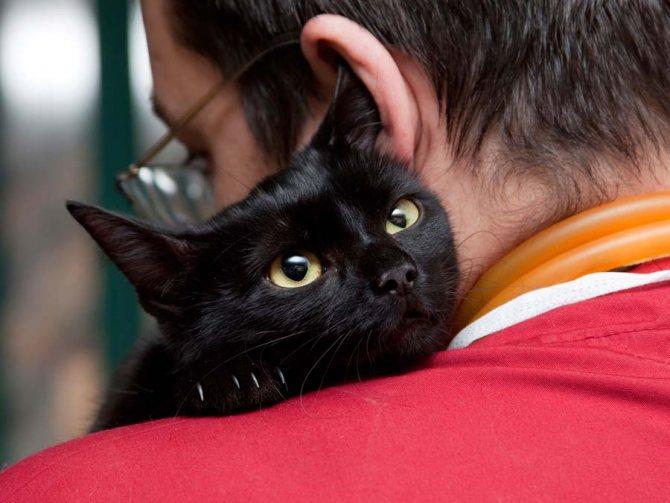 Память у кошек на людей