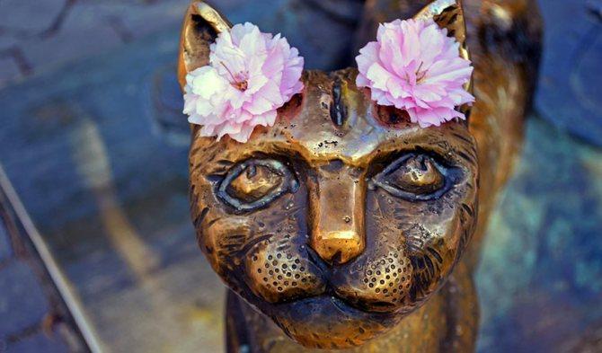 Памятник кошке в Ужгороде