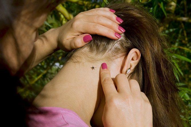 Паразит впивается в шею, грудь, подмышечные и паховые впадины