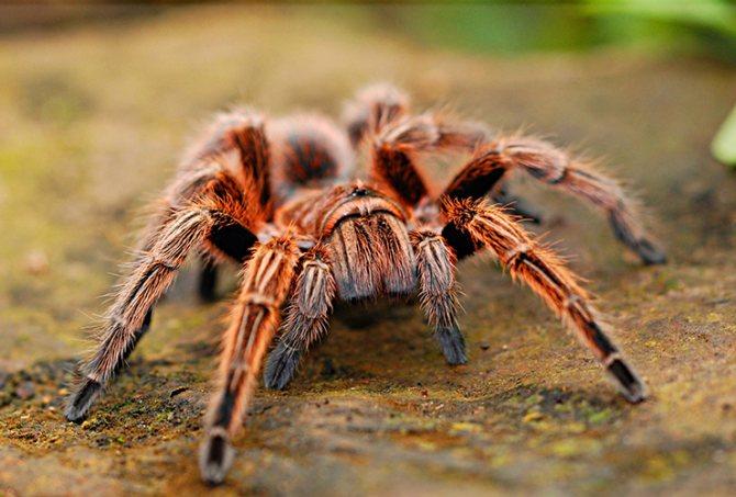 паук большой и страшный