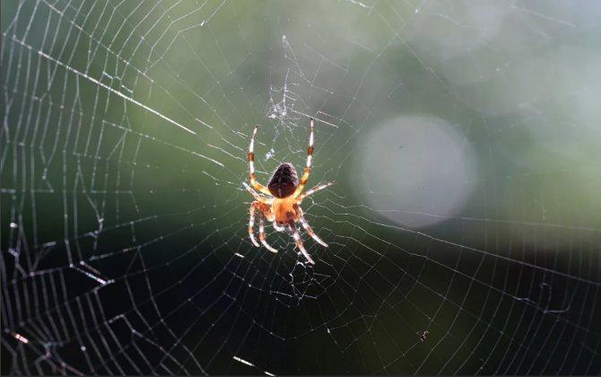 паук в машине с паутиной