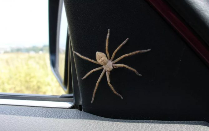 паук в машине у зеркала