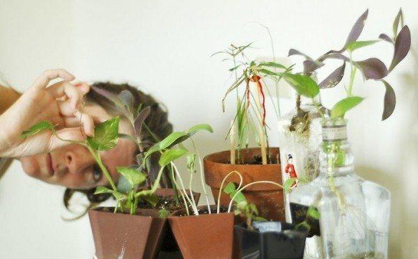 Паутинный клещ на комнатных растениях: как выглядит, фото, как бороться?