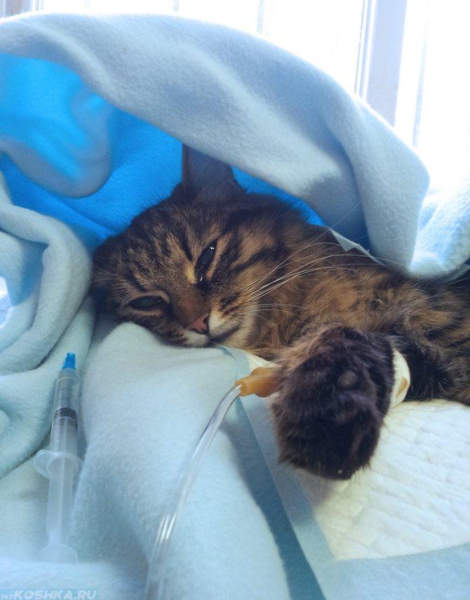 Печеночная недостаточность у котов диета