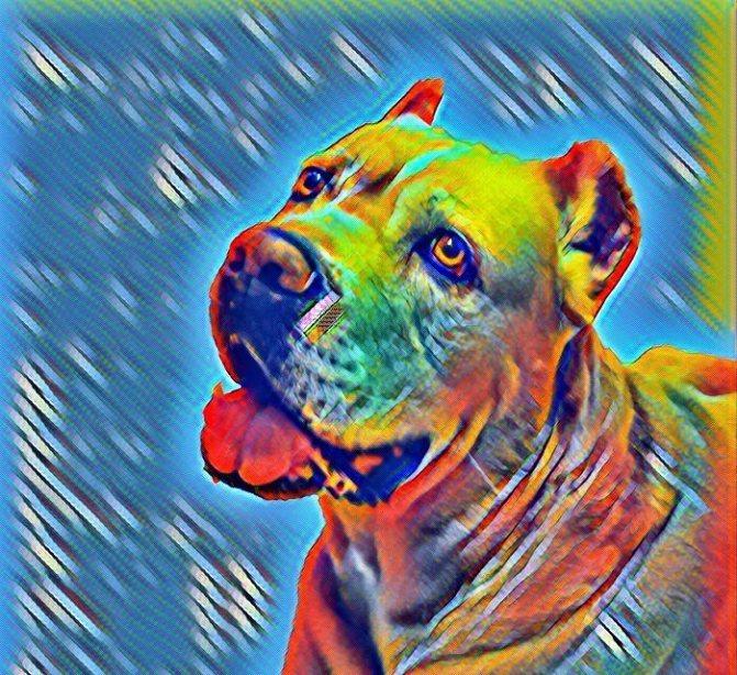 Печеночные шунты у собак