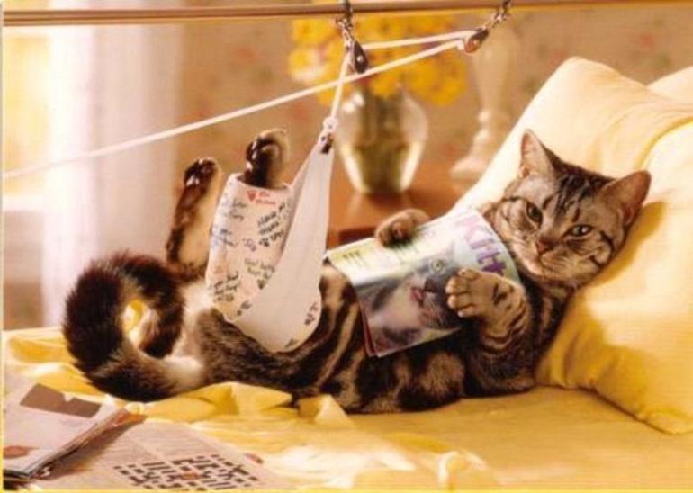Перелом костей у котов