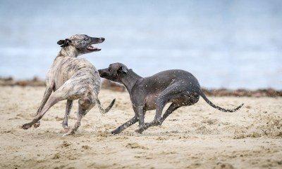Перелом у собаки что делатьВиды переломов, встречающихся у собакКак оказать первую помощь собаке при переломеТактика лечения переломов у собакВосстановительный период после перелома