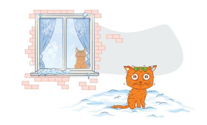 Переохлаждение и обморожение у кошек и собак