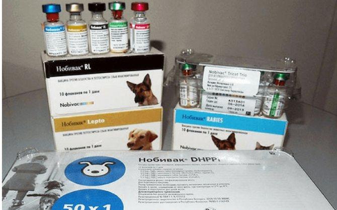 Первая прививка щенку немецкой овчарки: график вакцинации по возрасту
