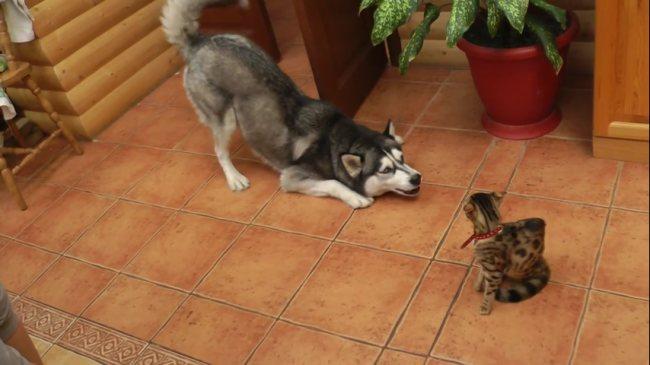первая встреча кошки и собаки