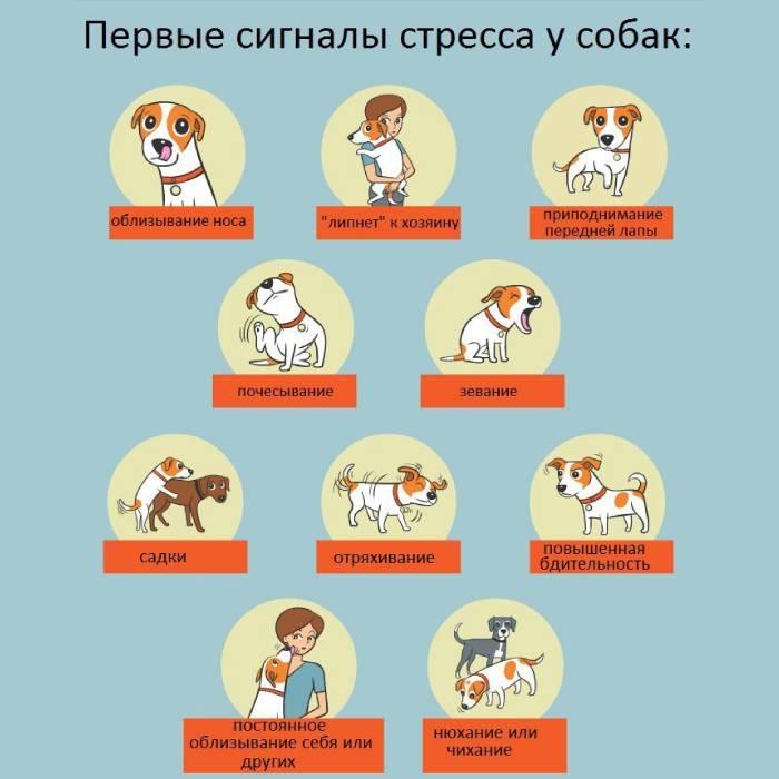 Первые сигналы стресса у пса