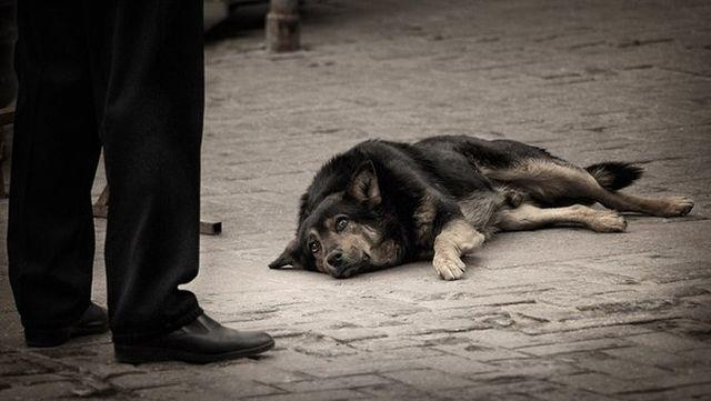 Пес лежит на тротуаре