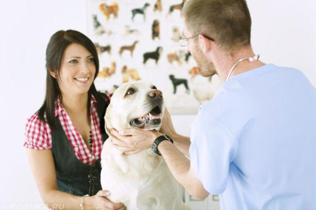 Пес с хозяйкой у ветеринара