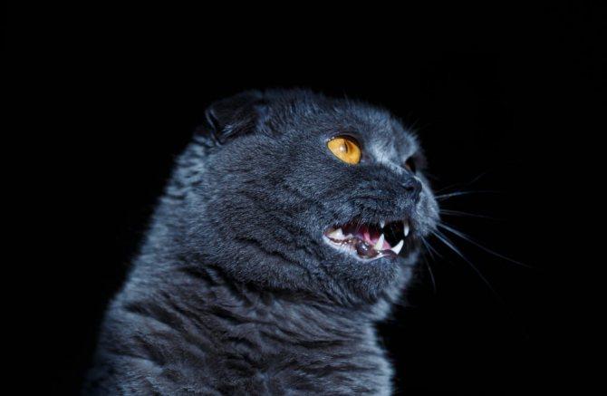 Пирантел кошкам - дозировка, как правильно давать