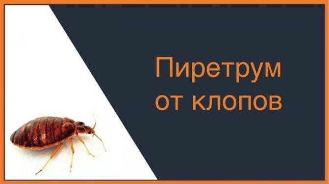 Пиретрум эффективен не только против клопов, но и против тараканов, домашних муравьев, клещей и даже комаров