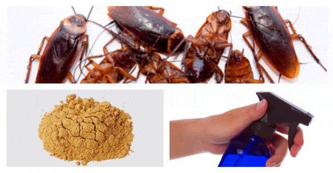 Пиретрум порошок от насекомыхПорошок пиретрума и его свойстваПиретрум для борьбы с постельными клопамиКак использовать порошок Пиретрум в борьбе против клоповПиретрум порошок от насекомыхПиретрум порошок от насекомых, фасовка 300 грамм