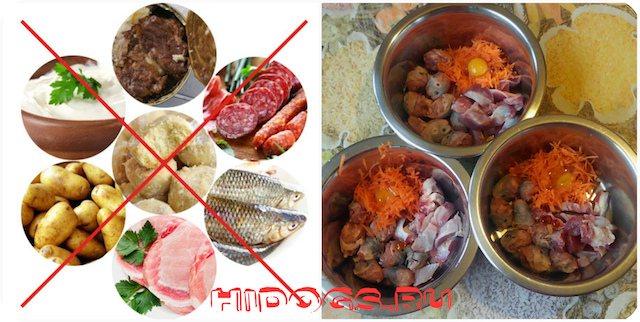 Питание для щенков кавказской овчарки, особенности, чем и сколько кормить, график питания.