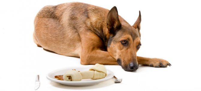 Диета собак после отравления
