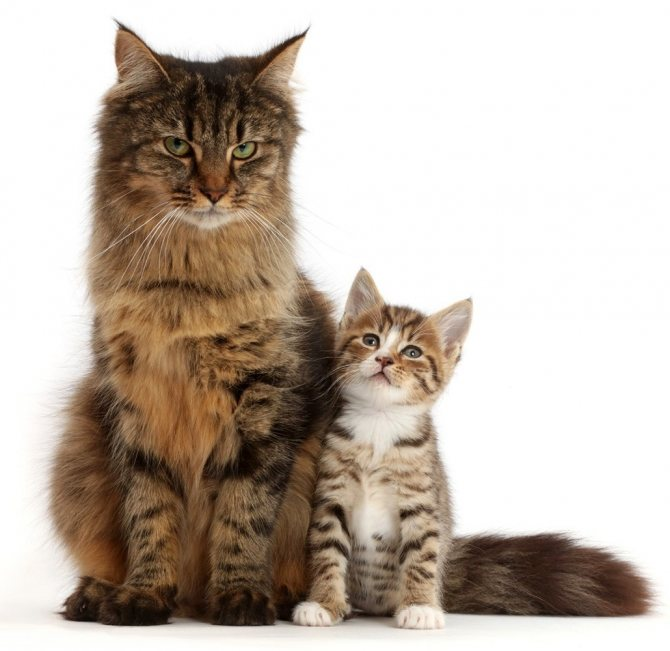 питание старых кошек и котят