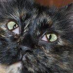 Пленка на глазах у кота