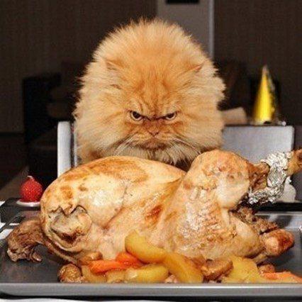 Плохой аппетит у кошки признаки причины лечение