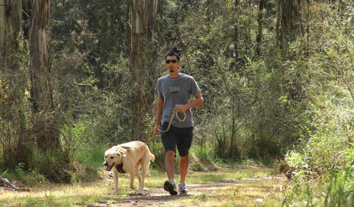 площадки для выгула собак