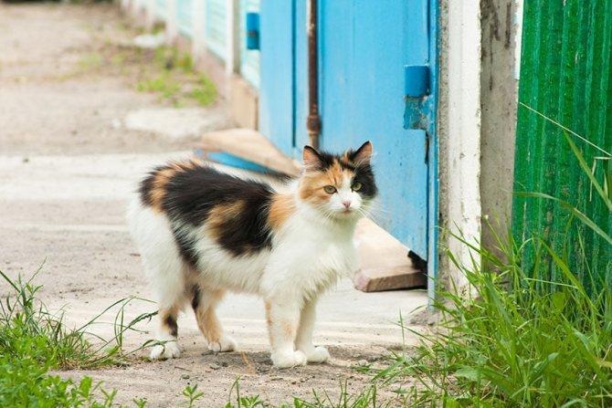 плюсы и минусы стерилизации кошек