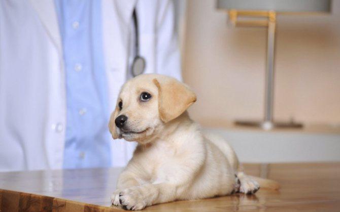 побочные эффекты от прививки у щенков