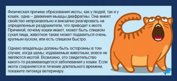 Почему кошка икает? - Zhivomag