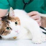 Почему кошка лижет руки хозяина: что означает, как избавиться от привычки