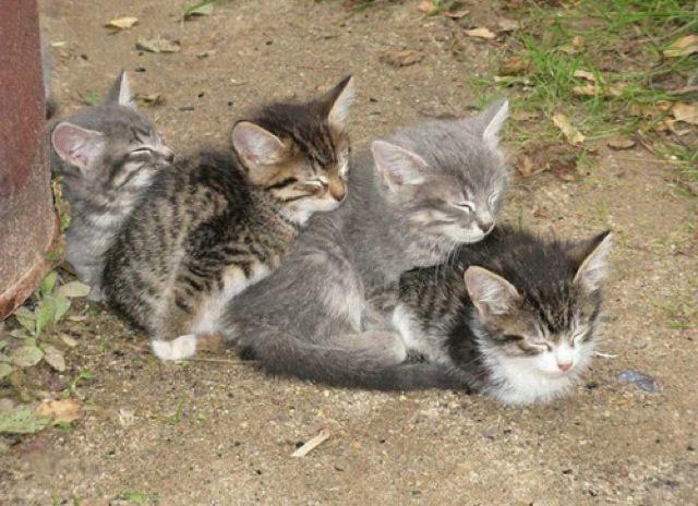 почему кошка мало ест и много спит