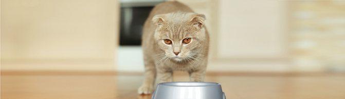 Почему кошка не ест сухой корм