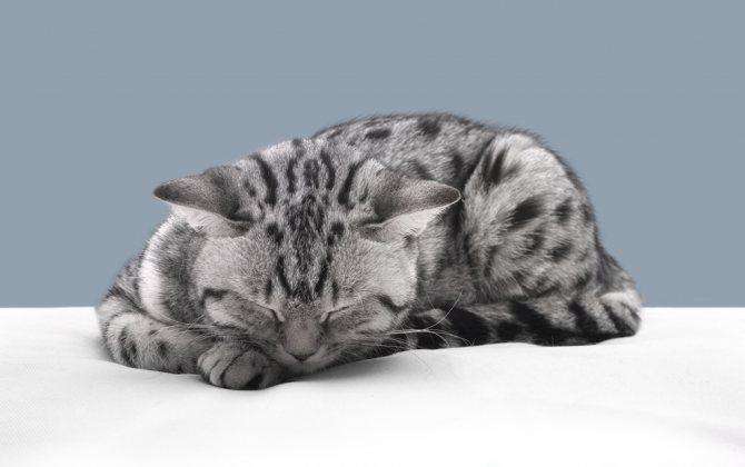 Почему кошка плохо ест и много спит