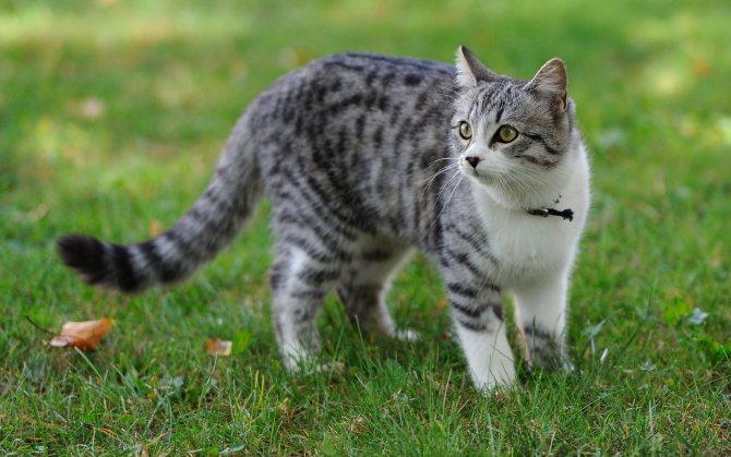 Почему кошка плохо ест: плохой аппетит у кошки