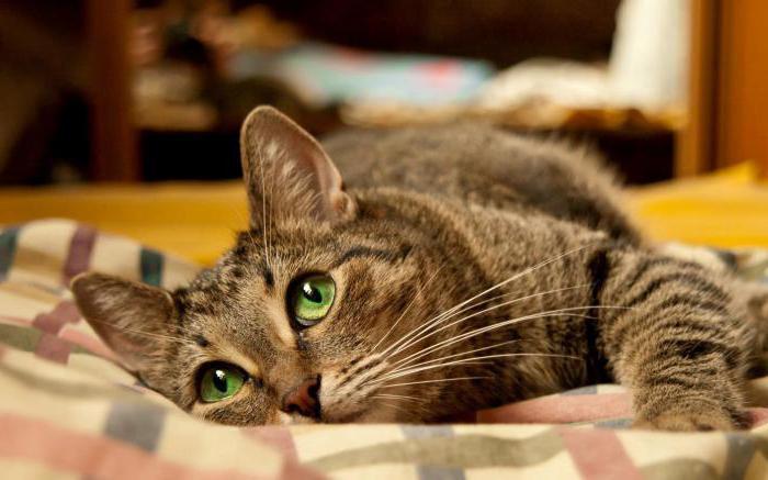 почему кошка вялая и много спит
