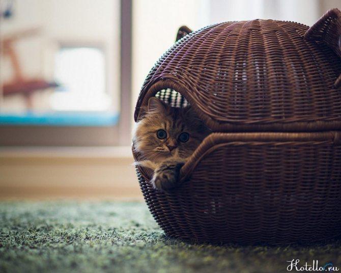 Почему кошка вытаскивает котят из коробки. Почему кошка таскает котят в зубах
