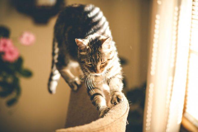 Почему кошкам нужно точить когти