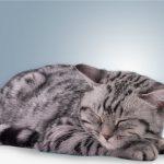 Почему кошки лезут в кровать к человеку, спят с людьми?