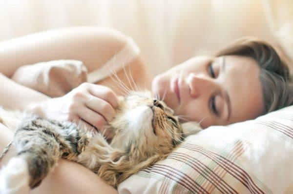 Почему кошки любят спать с хозяевами. Мнения опытных заводчиков читайте статью