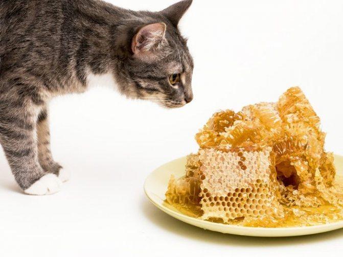 Почему кошки не чувствуют сладкое
