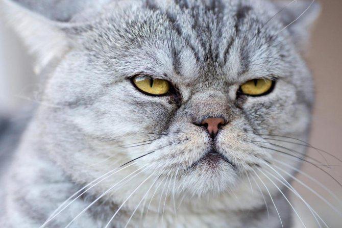 почему кошки трутся об людей