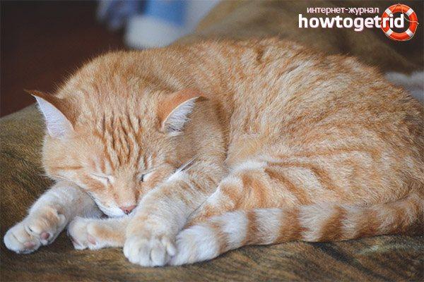 Почему кошки во сне дергаются
