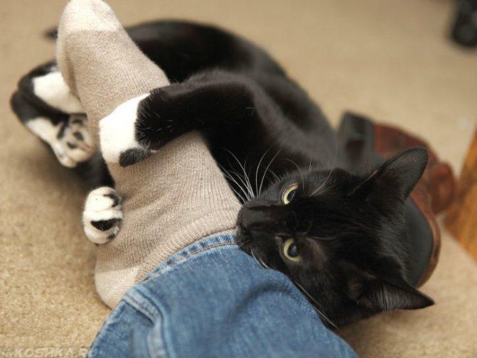 Почему кот бросается на ноги и кусается
