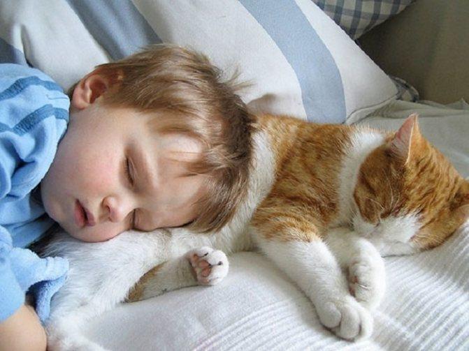 Почему коты и кошки любят спать на человеке, на голове человека?