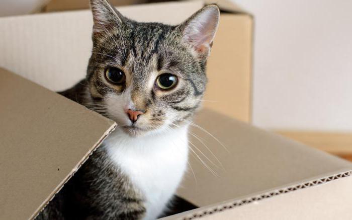 Почему коты залазят в коробки
