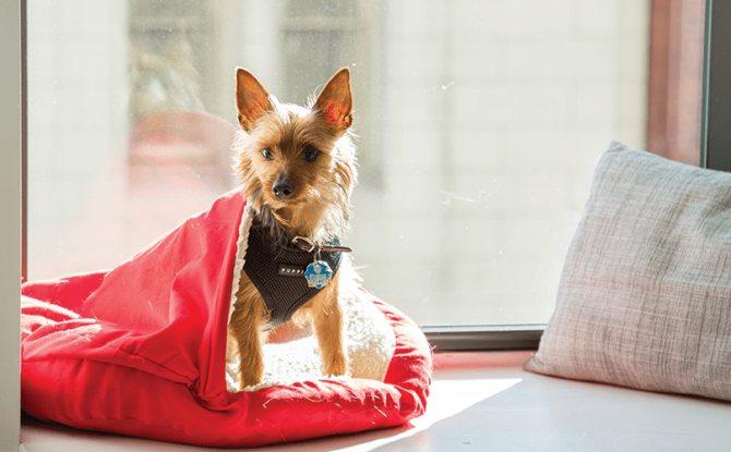 почему лучше снимать швы у собаки в домашних условиях