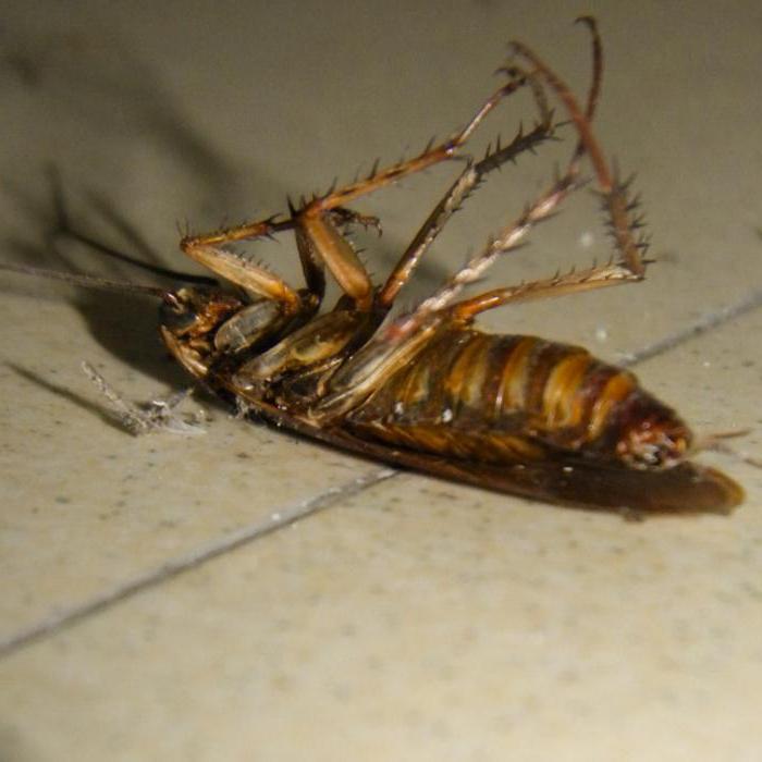 почему появляются тараканы